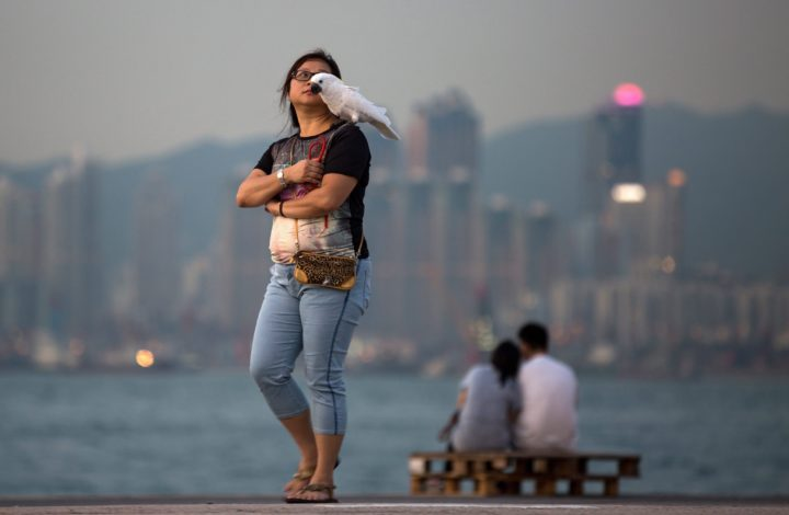 epa05322905 A woman carries her pet white cockatoo on a pier after sunset in Hong Kong, China, 22 May 2016.  EPA/JEROME FAVRE